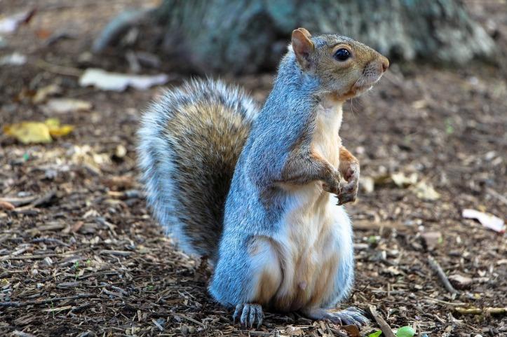 squirrel-1407699_1280